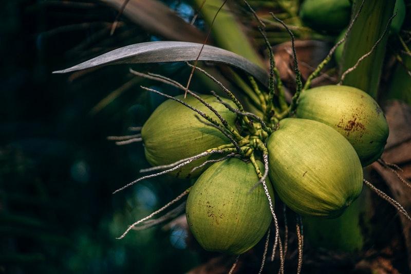 Cara Membuat Wajik Kelapa yang Enak dan Mudah